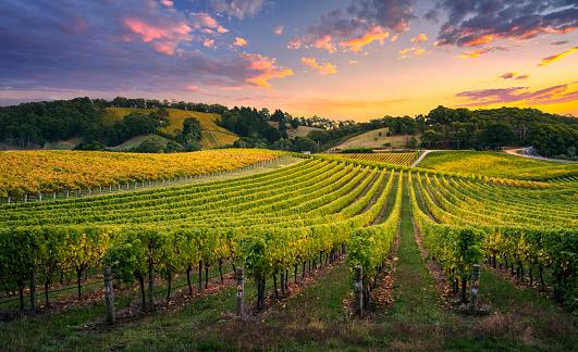 Comment investir dans les vignes grâce au groupement Viticole?
